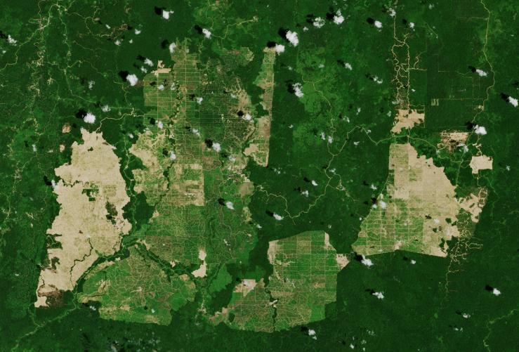 237_F_Palm_oil_plantations_ESA_sc (c) Copernicus Sentinel data (2019), ESA, CC BY-SA 3.0 IGO